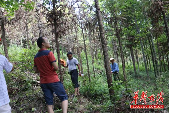但根治该地杉木黄化病的主要措施则是根据适地适树的